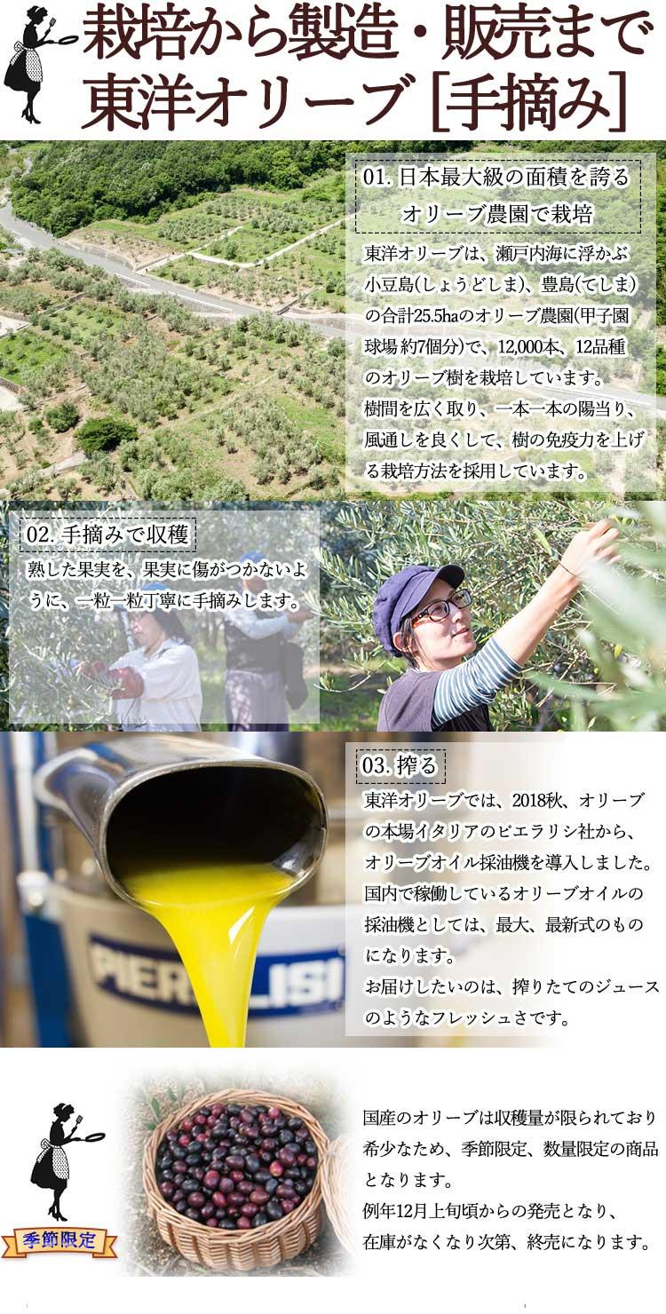 栽培から製造・販売まで 東洋オリーブ[手摘み]