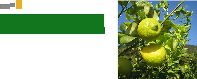 Secret1 小豆島は柴田農園の新鮮な手摘みレモンを使用